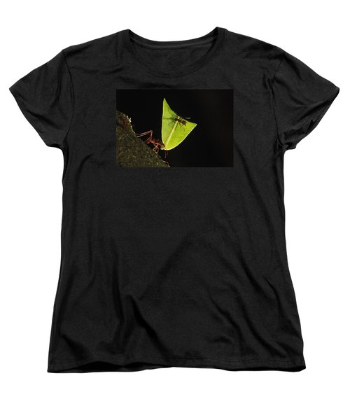Leafcutter Ant Atta Sp Carrying Leaf Women's T-Shirt (Standard Cut) by Cyril Ruoso