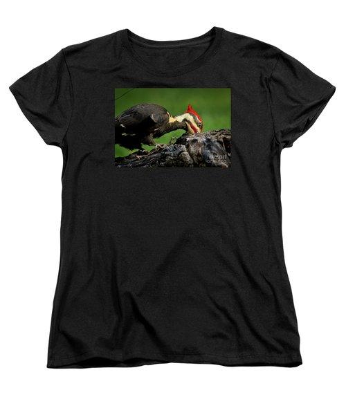 Pileated 3 Women's T-Shirt (Standard Cut) by Douglas Stucky