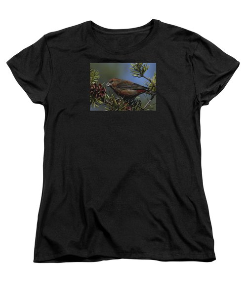 Red Crossbill Feeds On Pine Cone Seeds Women's T-Shirt (Standard Cut) by Mark Wallner