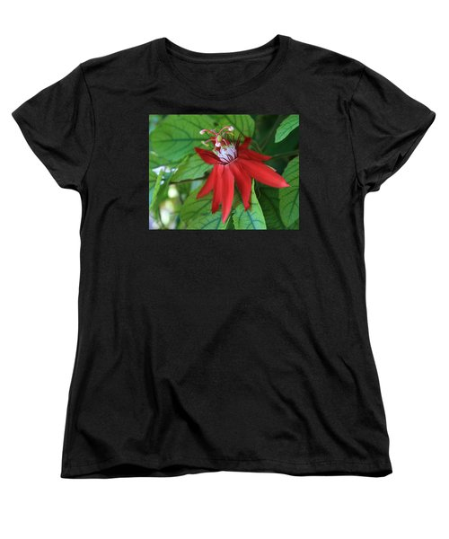 Red Passion Women's T-Shirt (Standard Cut) by Marna Edwards Flavell