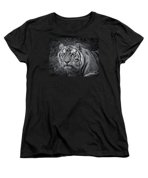 Tiger In The Grass Women's T-Shirt (Standard Cut) by Darcy Michaelchuk