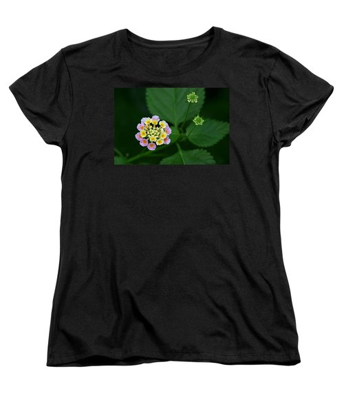 Waiting Their Turn Women's T-Shirt (Standard Cut) by Shari Jardina
