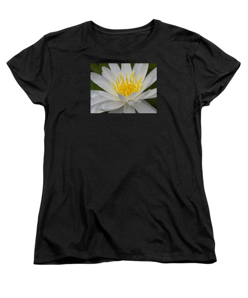 Water Lily Women's T-Shirt (Standard Cut)