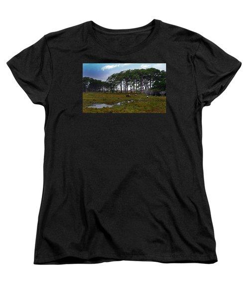 Wild Ponies Of Assateague Women's T-Shirt (Standard Cut)