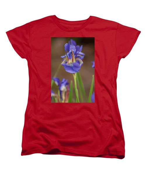 Purple Bearded Iris Women's T-Shirt (Standard Cut) by Brenda Jacobs