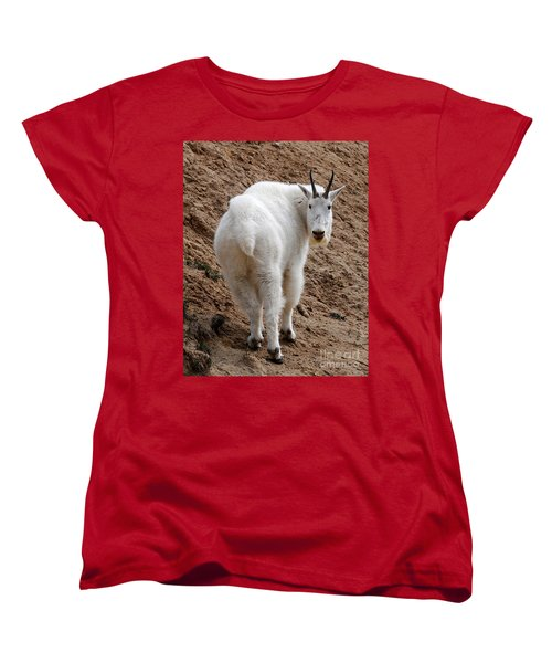 Women's T-Shirt (Standard Cut) featuring the photograph Are You Following Me by Vivian Christopher