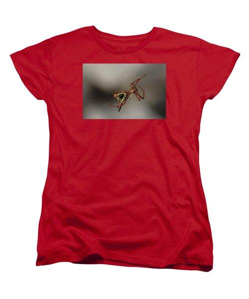 Arrow-shaped Micrathena Spider Starting A Web Women's T-Shirt (Standard Cut) by Daniel Reed
