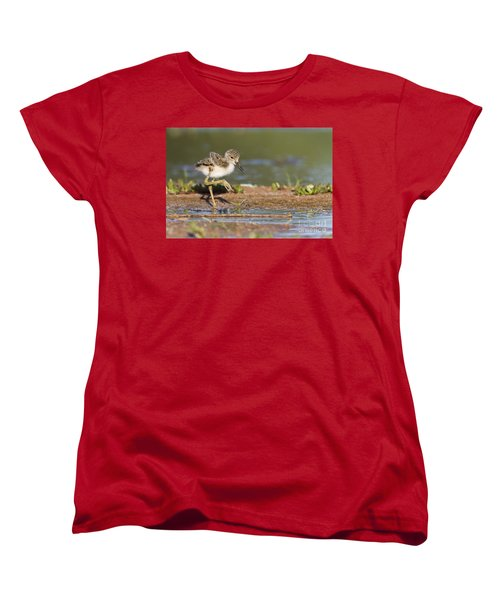 Baby Black-necked Stilt Exploring Women's T-Shirt (Standard Cut) by Bryan Keil