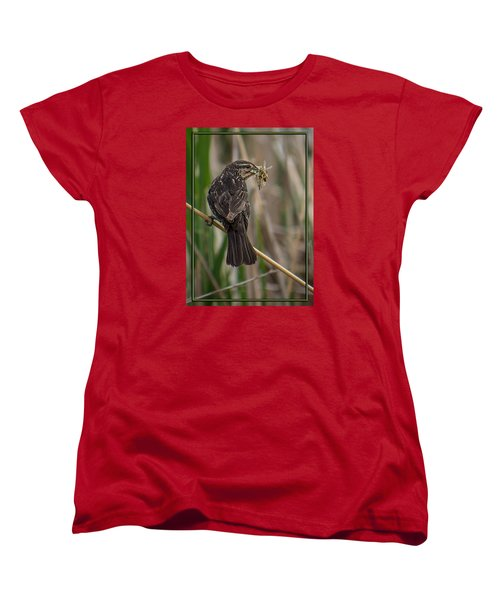 Women's T-Shirt (Standard Cut) featuring the photograph Big Dinner For Female Red Winged Blackbird II by Patti Deters