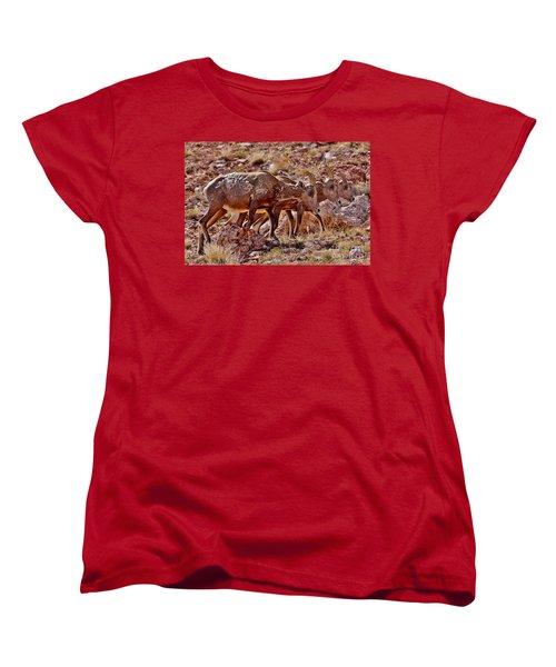 Women's T-Shirt (Standard Cut) featuring the photograph Bighorn Canyon Sheep Trio by Janice Rae Pariza