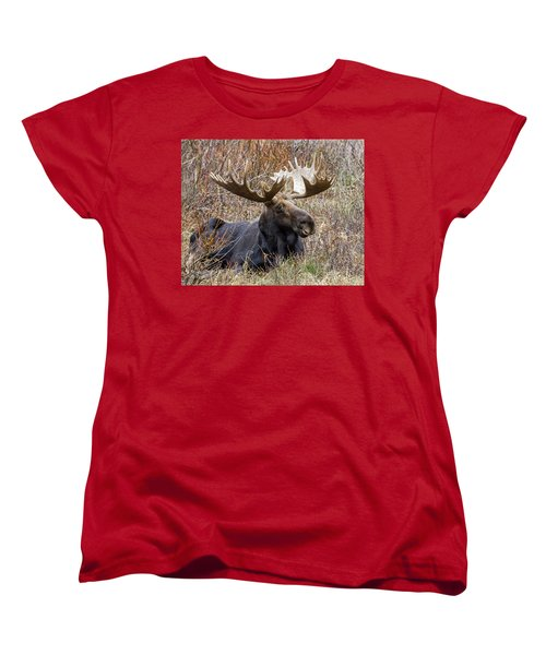 Bull Moose In Autumn Women's T-Shirt (Standard Cut) by Jack Bell