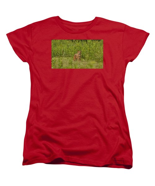 Coyote Happy Women's T-Shirt (Standard Cut) by Eric Liller