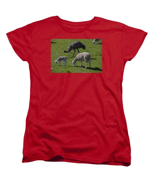 Emu And Sheep Women's T-Shirt (Standard Cut) by Garry Gay