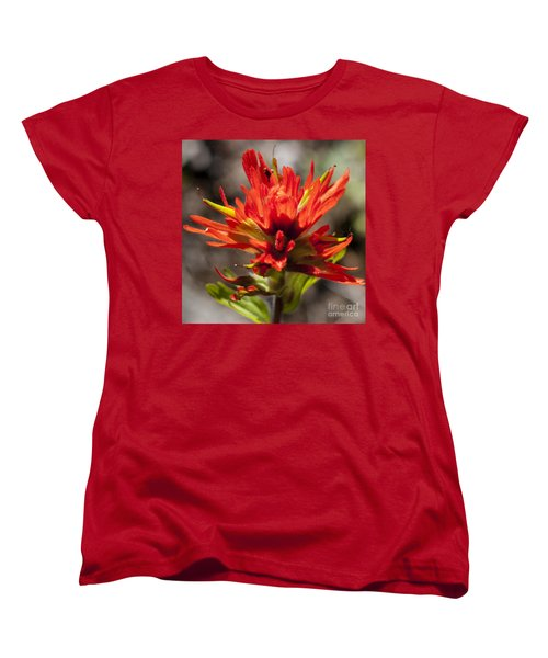 Indian Paintbrush Women's T-Shirt (Standard Cut) by Belinda Greb
