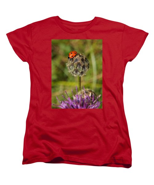 Ladybird Women's T-Shirt (Standard Cut) by Ron Harpham