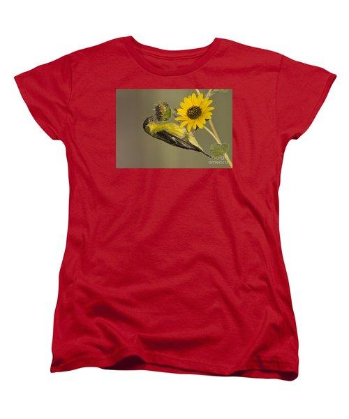 Lesser Goldfinch On Sunflower Women's T-Shirt (Standard Cut) by Bryan Keil