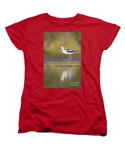 Women's T-Shirt (Standard Cut) featuring the photograph Morning Avocet by Bryan Keil