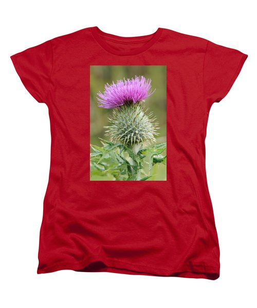 Purple Thistle Women's T-Shirt (Standard Cut) by Jeremy Voisey