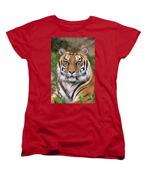 Siberian Tiger Staring Endangered Species Wildlife Rescue Women's T-Shirt (Standard Cut) by Dave Welling