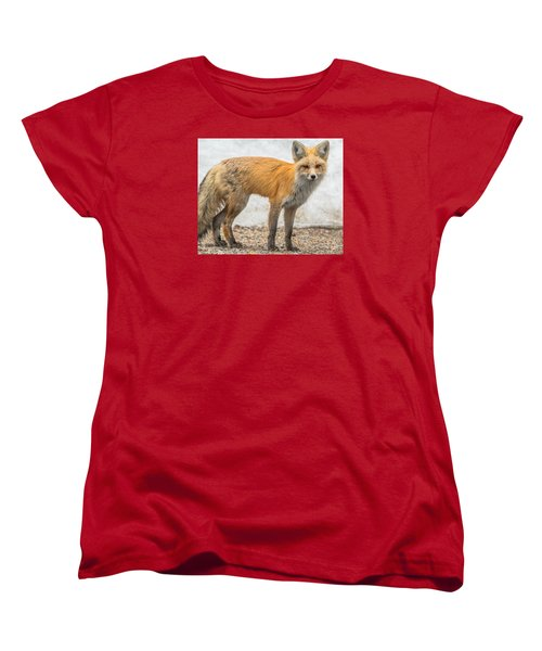 Smart Like A Fox Women's T-Shirt (Standard Cut) by Yeates Photography