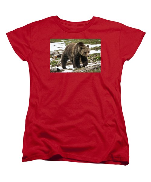 Women's T-Shirt (Standard Cut) featuring the photograph Spring Grizzly Bear by Jack Bell
