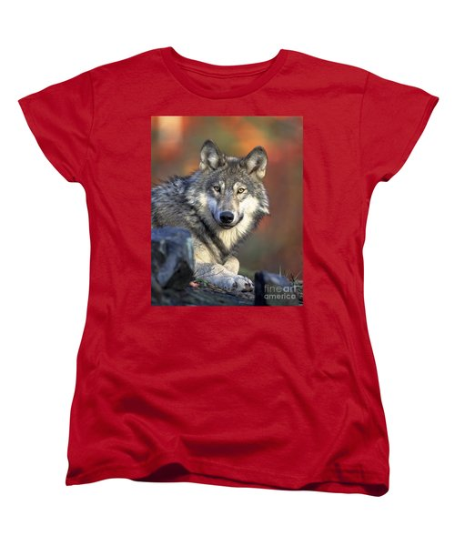 Women's T-Shirt (Standard Cut) featuring the photograph Wolf Predator Canidae Canis Lupus Hunter by Paul Fearn