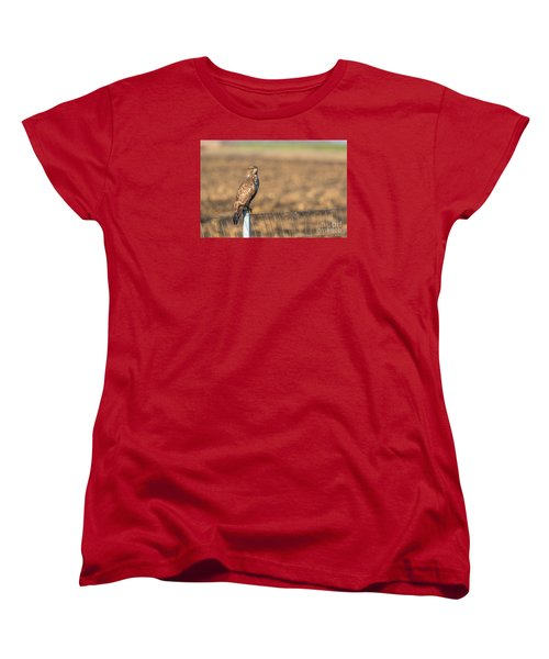 Women's T-Shirt (Standard Cut) featuring the photograph Common Buzzard Along The Highway Nis - Budapest by Jivko Nakev