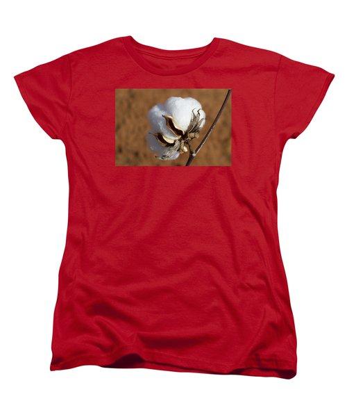 Limestone County Cotton Boll Women's T-Shirt (Standard Cut) by Kathy Clark
