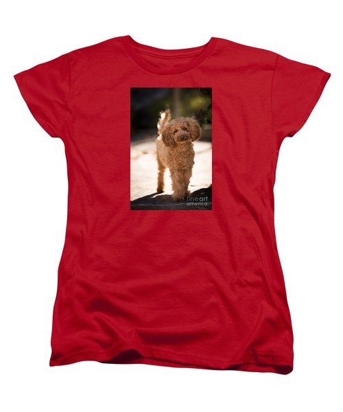 Poodle Women's T-Shirt (Standard Cut) by Maurizio Bacciarini