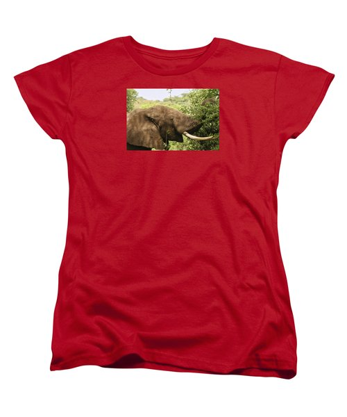 Women's T-Shirt (Standard Cut) featuring the photograph Browsing Elephant by Gary Hall