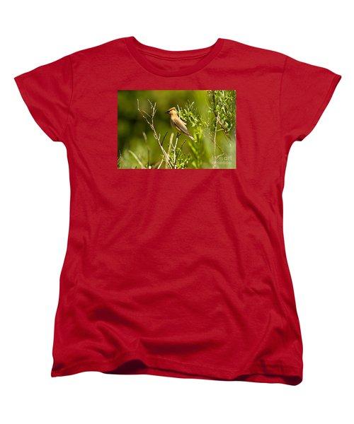 Cedar Waxwing At Glacier Women's T-Shirt (Standard Cut) by Adam Jewell