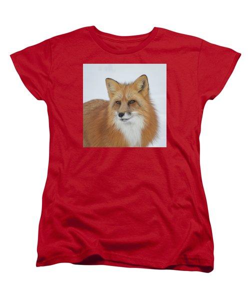 Curious Fox Women's T-Shirt (Standard Cut) by Jack Bell