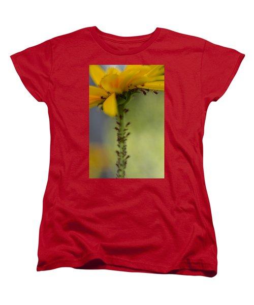 Heliopsis Infested Women's T-Shirt (Standard Cut) by Janet Rockburn