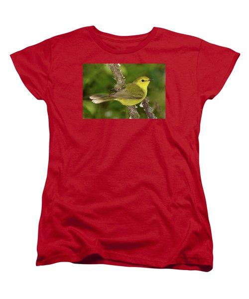 Hooded Warbler Female Women's T-Shirt (Standard Cut) by Alan Lenk
