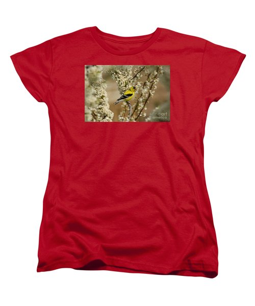 Women's T-Shirt (Standard Cut) featuring the photograph Male Finch In Blossoms by Cathy  Beharriell