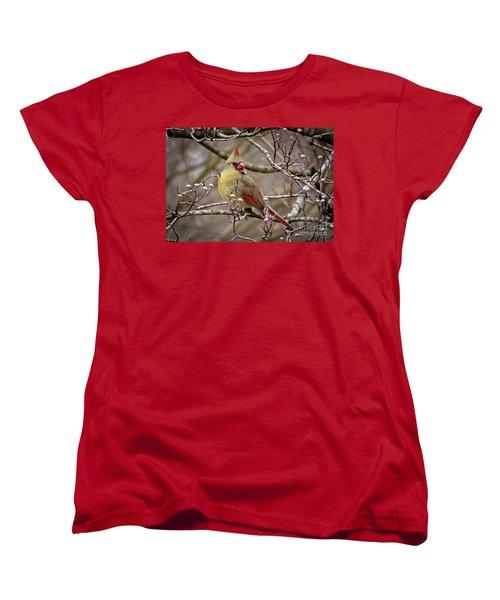 Women's T-Shirt (Standard Cut) featuring the photograph Mrs Cardinal II by Douglas Stucky
