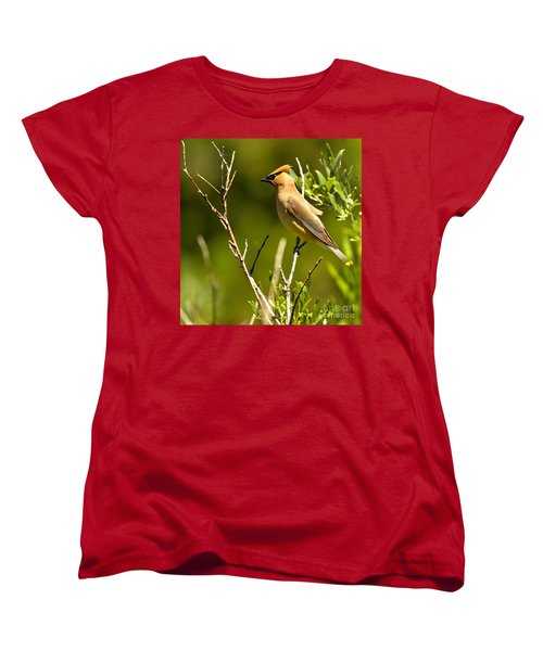Perfectly Perched Women's T-Shirt (Standard Cut) by Adam Jewell