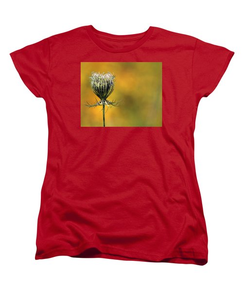 Queen Anne's Lace Stony Brook New York Women's T-Shirt (Standard Cut) by Bob Savage
