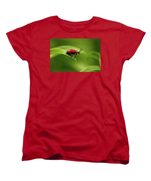 Red Scarlet Lily Beetle On Plant Women's T-Shirt (Standard Cut) by Sergey Taran