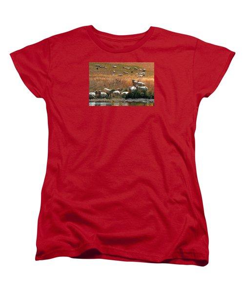 Women's T-Shirt (Standard Cut) featuring the photograph Sheep Country by Deborah Moen