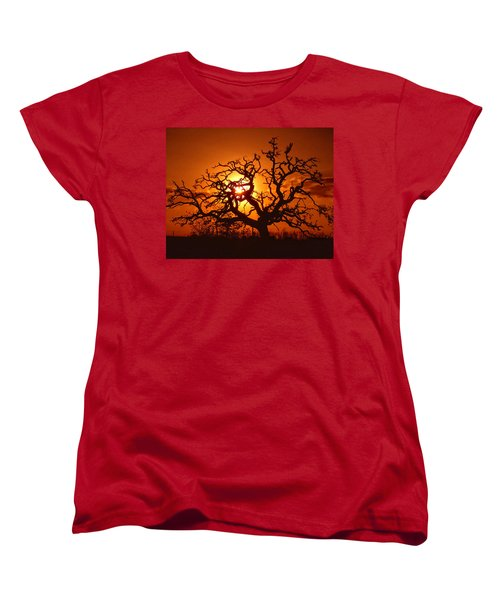 Spooky Tree Women's T-Shirt (Standard Cut) by Stephen Anderson