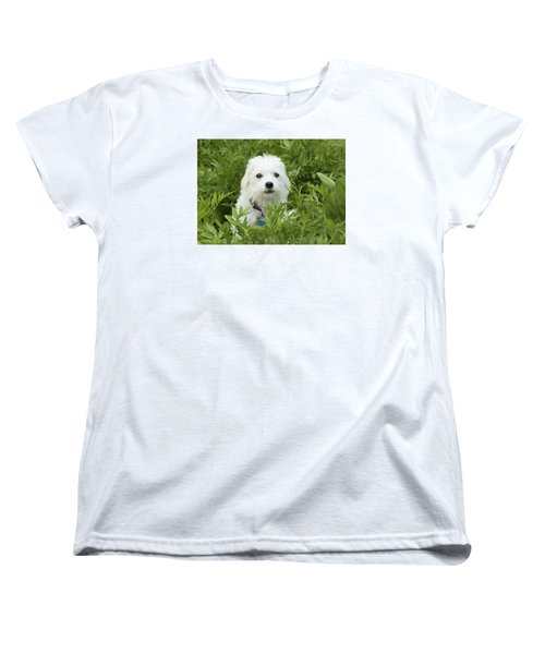 Women's T-Shirt (Standard Cut) featuring the photograph Oops Busted - Cute White Dog by Jane Eleanor Nicholas
