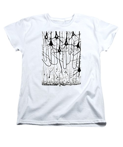 Pyramidal Cells Illustrated By Cajal Women's T-Shirt (Standard Cut) by Science Source