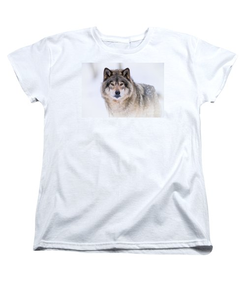 Timber Wolf Pictures 256 Women's T-Shirt (Standard Cut) by Wolves Only