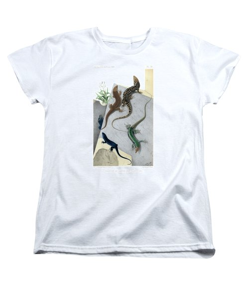 Women's T-Shirt (Standard Cut) featuring the drawing Varieties Of Wall Lizard by Jacques von Bedriaga