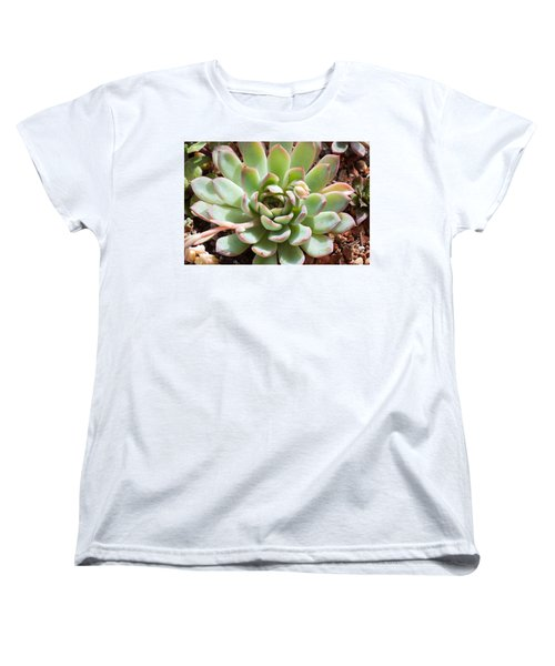 A Young Succulent Plant Women's T-Shirt (Standard Cut) by Catherine Lau
