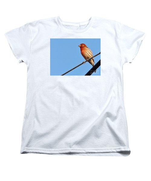 American Crossbill On Wire     Spring   Indiana   Women's T-Shirt (Standard Cut) by Rory Cubel