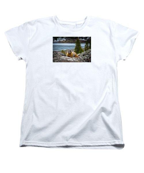 Curious Marmot Women's T-Shirt (Standard Cut) by Michael J Bauer