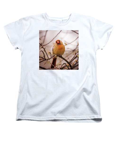 Women's T-Shirt (Standard Cut) featuring the photograph Northern Female Cardinal Pose by Terry DeLuco