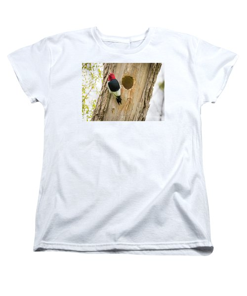 Red-headed Woodpecker At Home Women's T-Shirt (Standard Cut) by Ricky L Jones